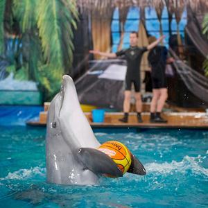 Дельфинарии, океанариумы Загорска